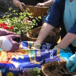 Community Gardening….. a sight to behold