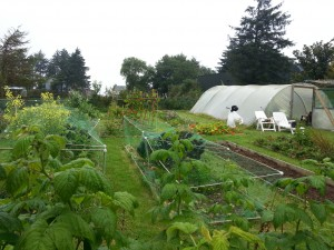 The Greenside Up Garden