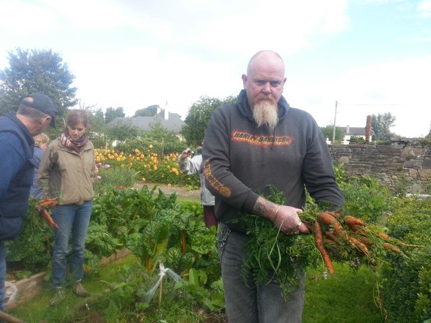 Harvesting Carrots Greenside Upgreenside Up