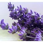 """It's Time for Tea"" ~ Grow Your Own Lavender Tea"