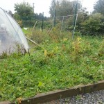 Callan Community Garden ~ Progress At Last