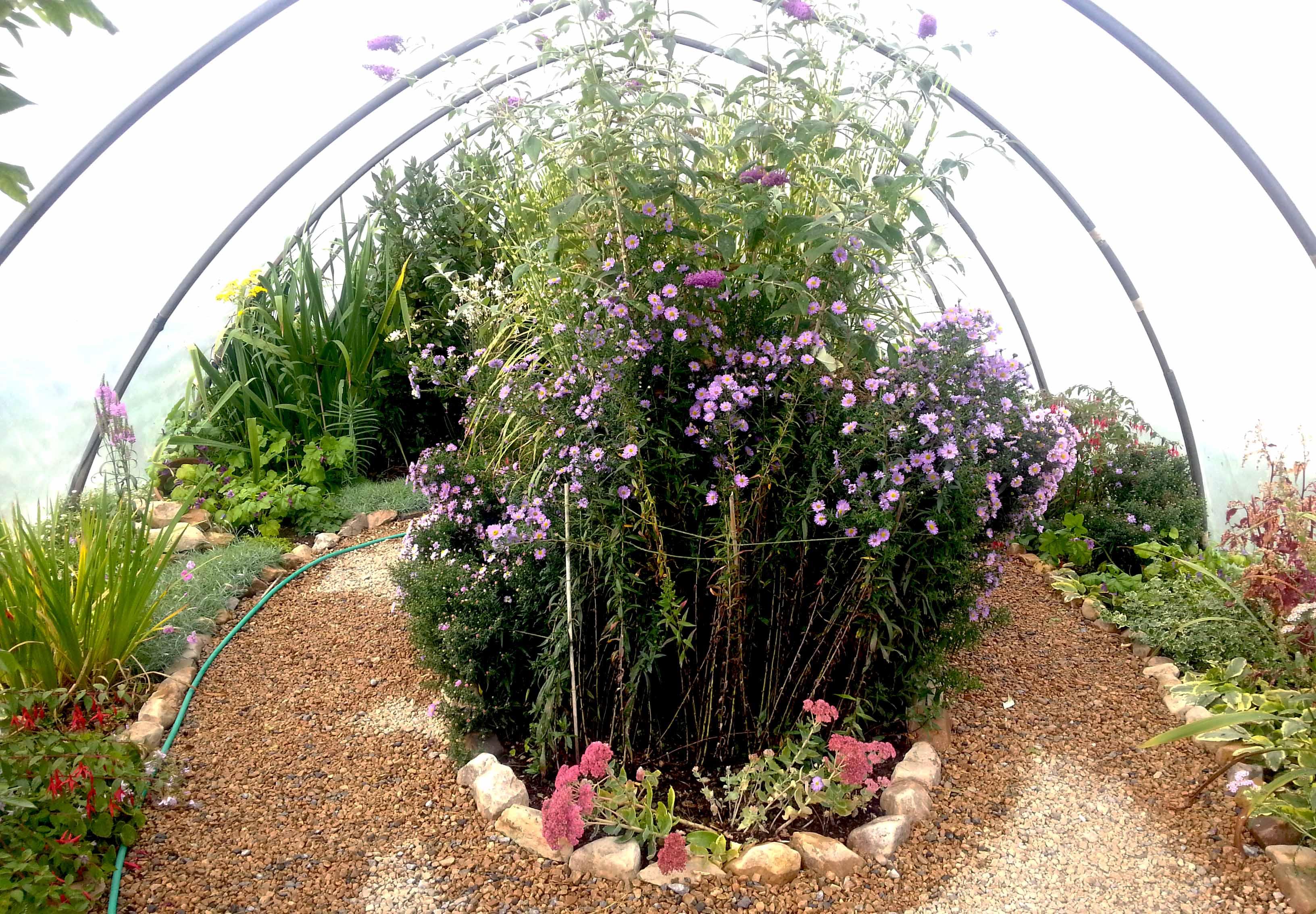 Organic Ornamental Polytunnel