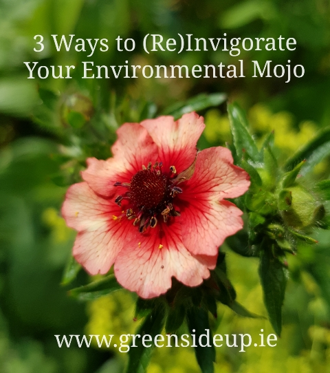 3 Ways to (Re)Invigorate Your Environmental Mojo