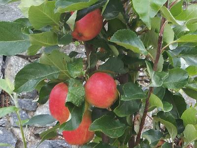 Community Harvest Fruit Projects