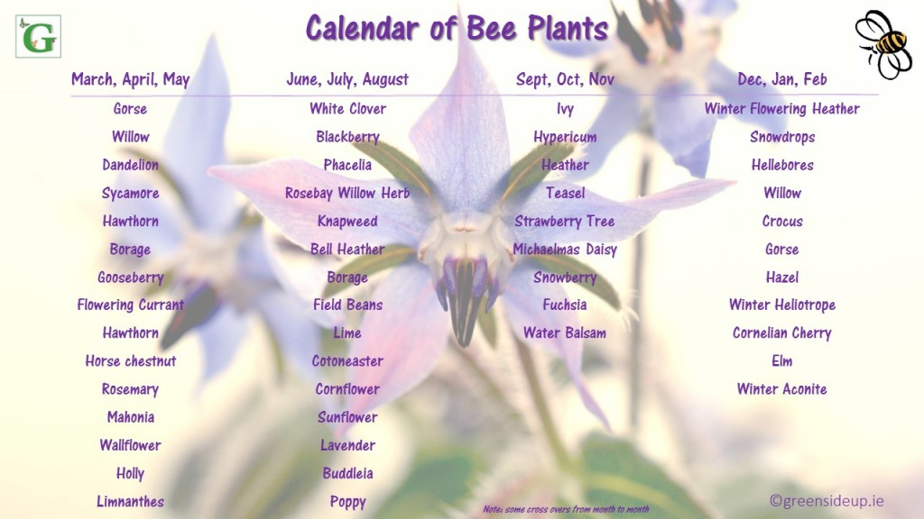 Calendar of Plants for Bees | greensideup.ie