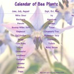 Bee Calendar of Plants