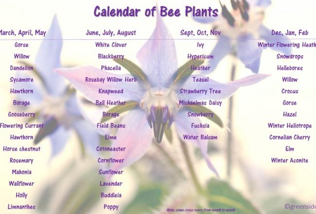 Calendar of Plants for Bees | greensideup.ie