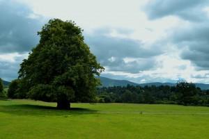 2 Beautiful Garden Ideas in County Carlow