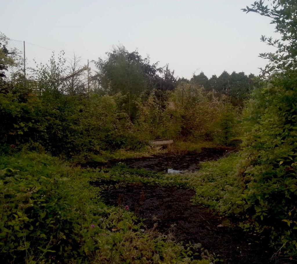 Carlow Community Garden - An Gairdin Beo