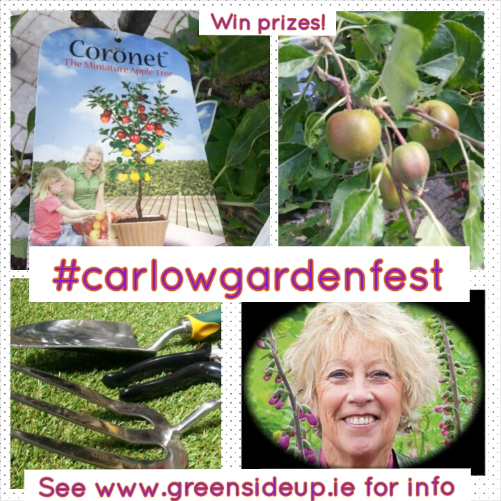 Carlow Garden Festival Prizes