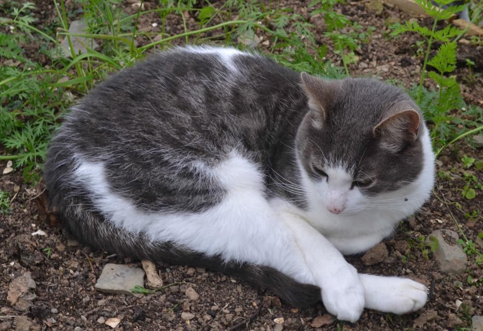 How To Stop Cats Pooping In The Gardengreenside Up