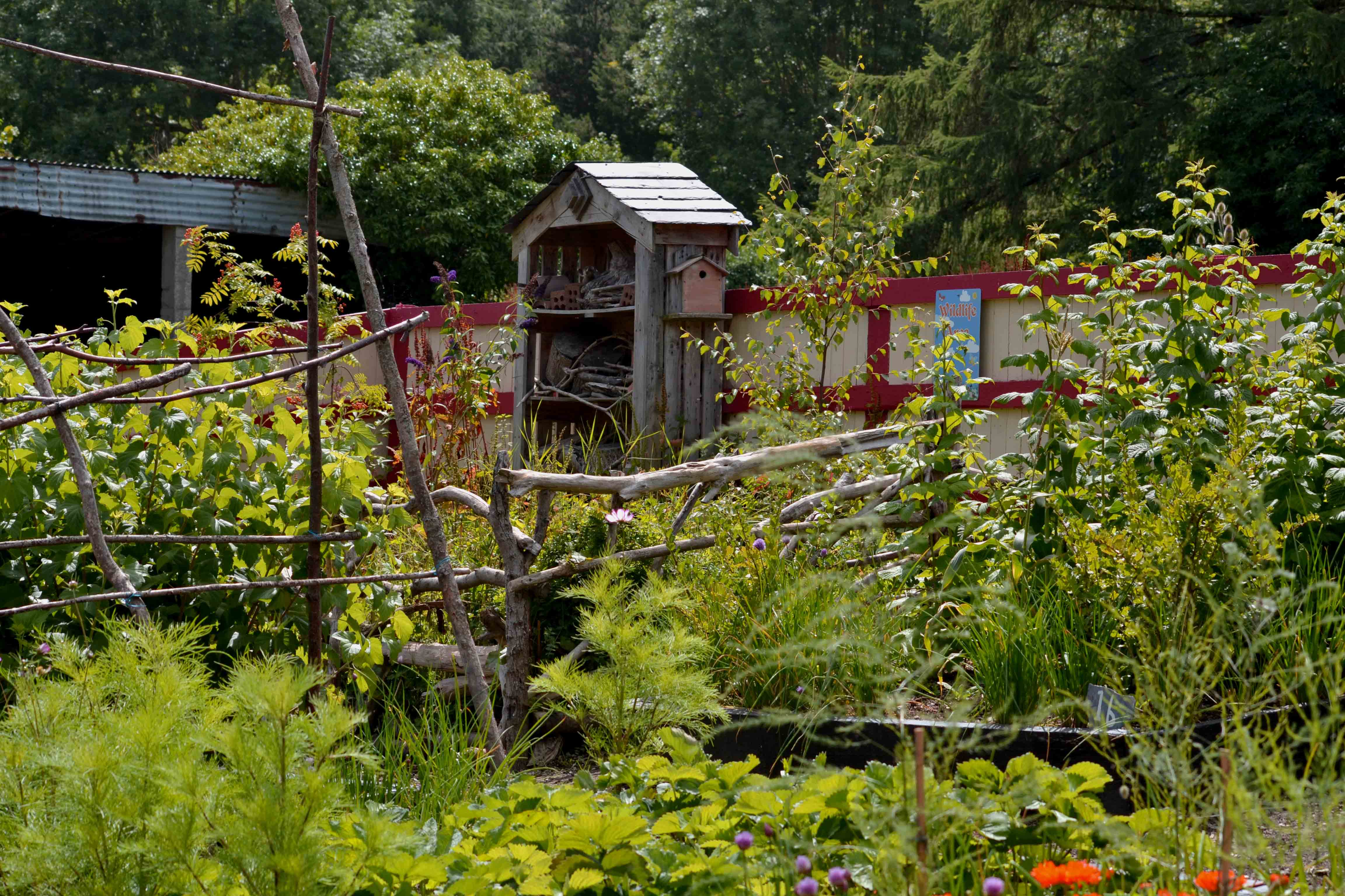 Life in a Community Garden from greensideup.ie