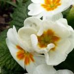 Garden Visit: Delta Centre Sensory Gardens, Carlow