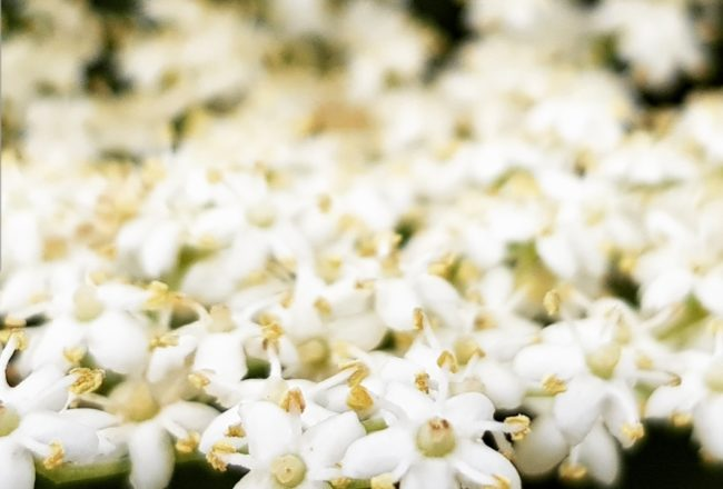 Reduced Sugar Elderflower Cordial Recipe