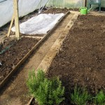What to sow in a polytunnel in February