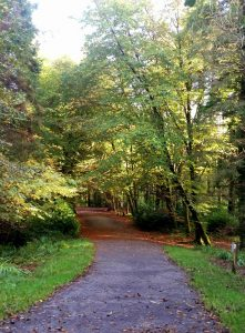 Miners Way and Historical Trail, Co Roscommon