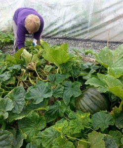 Cooking Pumpkins in the Community | greensideup.ie