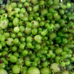 Gooseberry, Jostaberry and Elderflower Jam