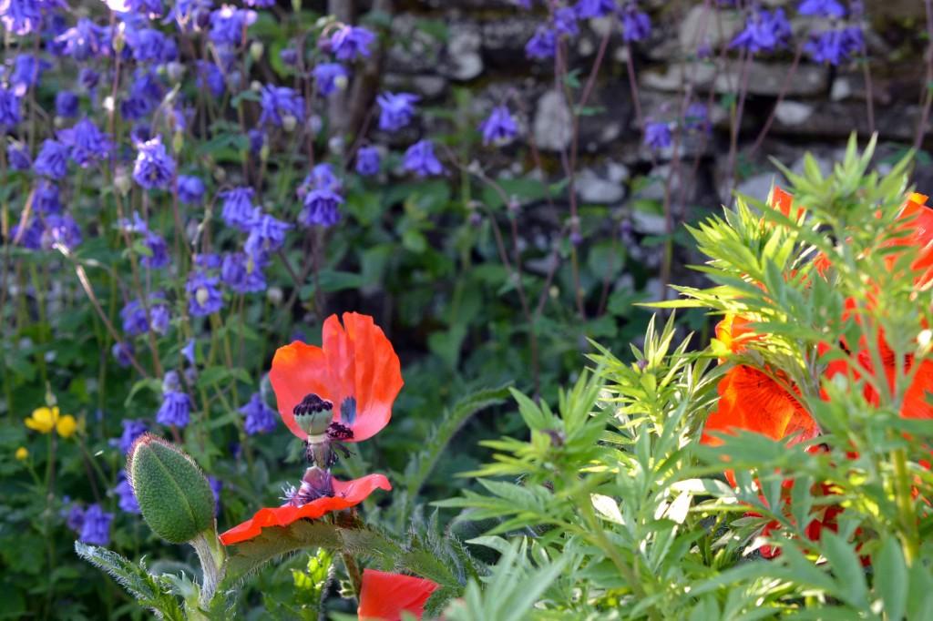 Greenside Up Garden June
