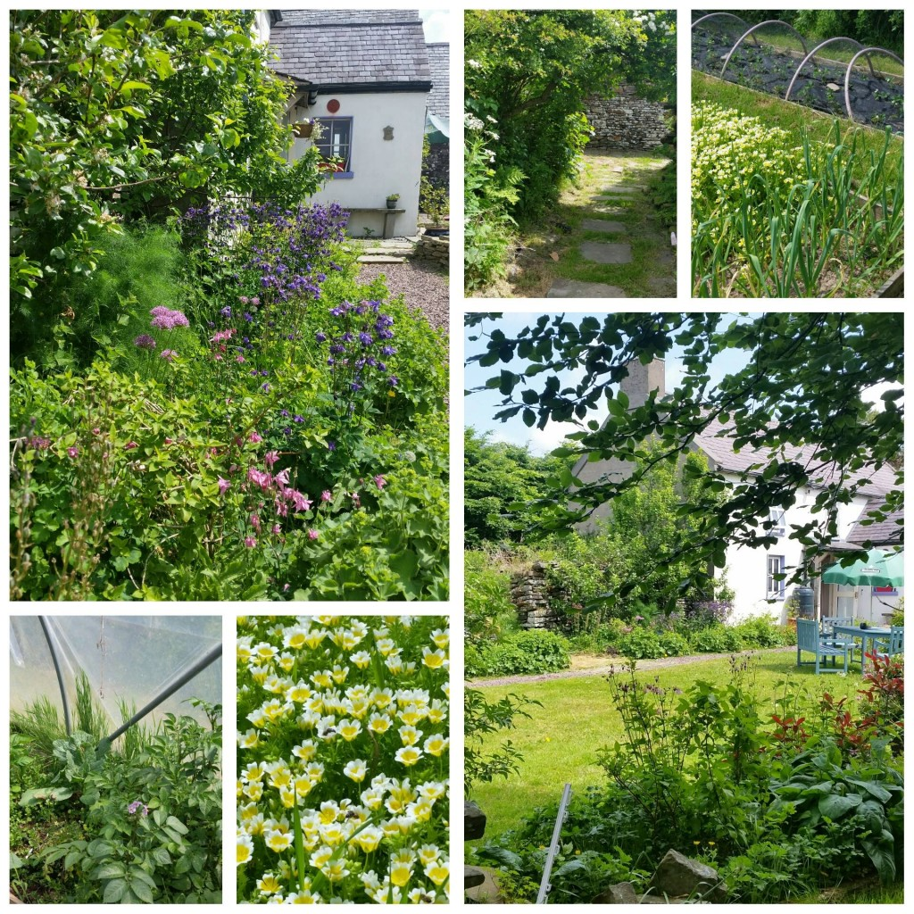 Shifting the Focus - Greenside Up Garden June 2016
