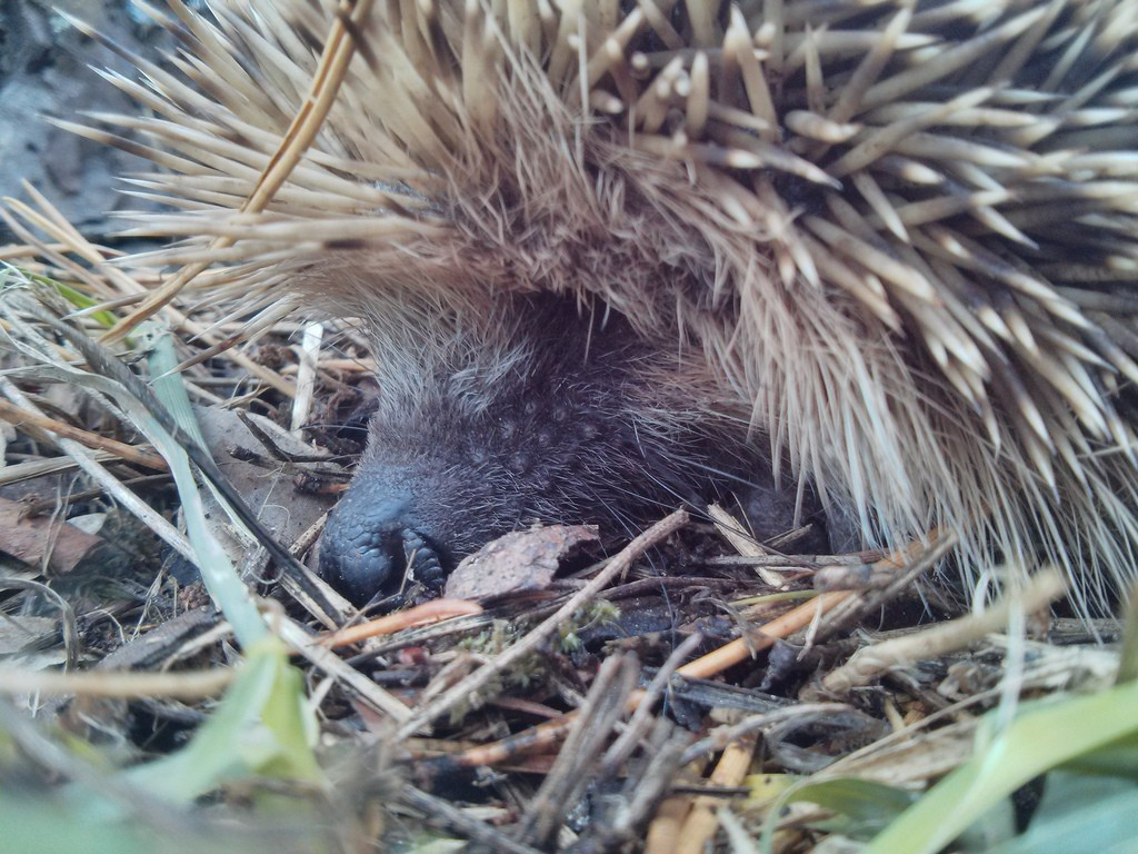 Keep an eye out for hedgehogs and wildlife in the garden