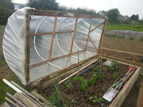 Hinged cloche / polytunnel in an allotment