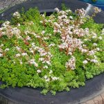 How to Build a Sedum Green Roof Structure