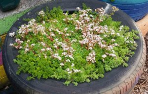 How to grow a green roof