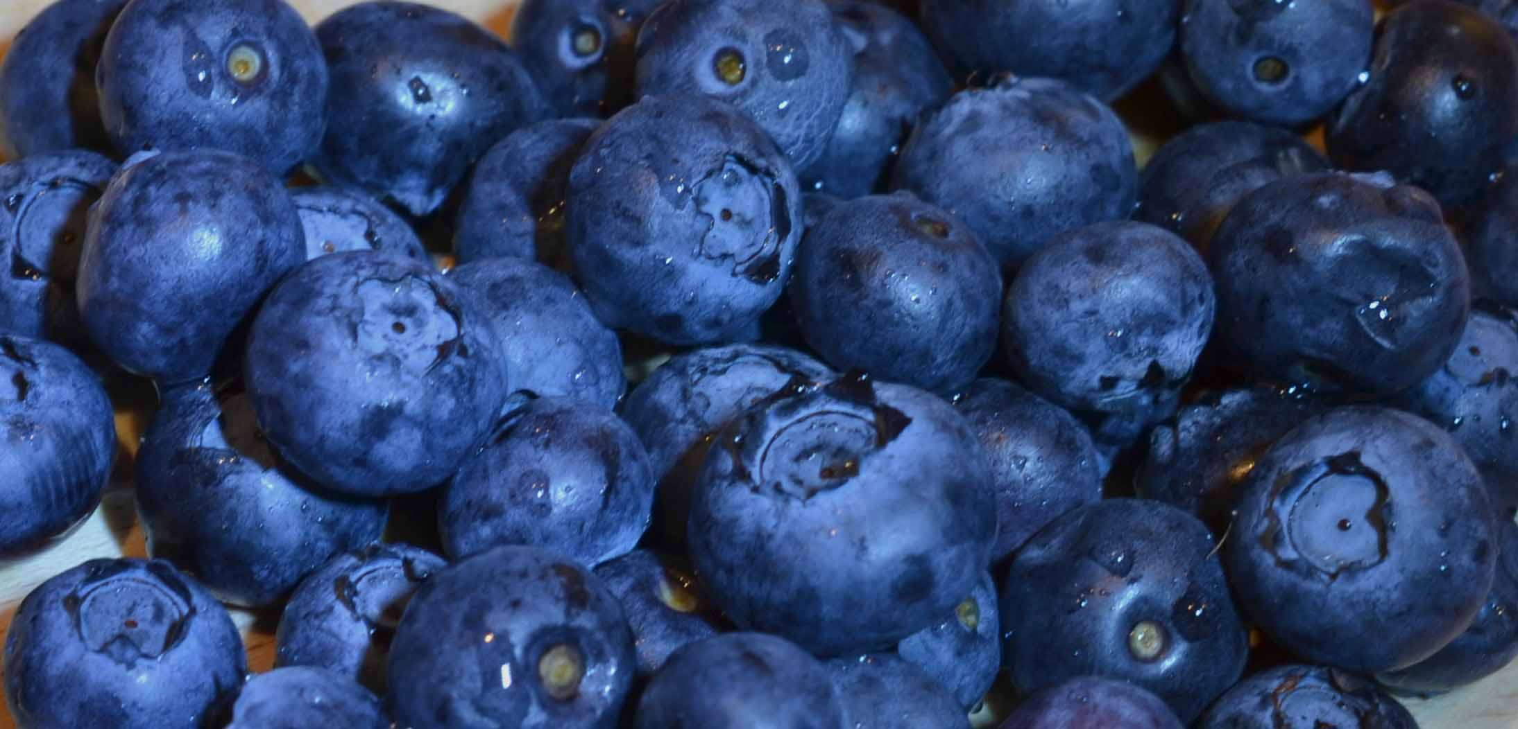 How To Grow Blueberries Amp Bake Healthy Blueberry