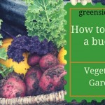 How to create a Budget Vegetable Garden