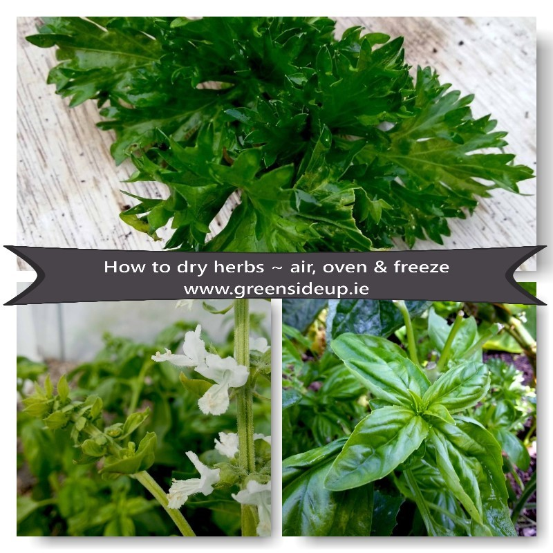 How to dry herbs ~ air, oven & freeze