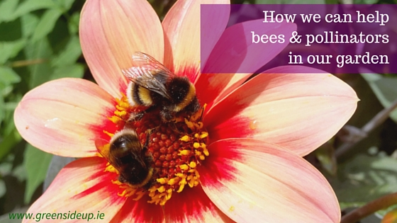 How we can help bees & pollinators in our garden