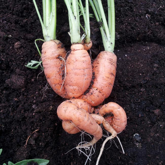 14 vegetables to grow in a small gardengreenside up for What vegetables to grow