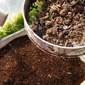 How to use coffee grounds in the gardengreenside up for How to use coffee grounds in garden