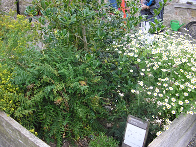 Kilgraney Herb Gardens