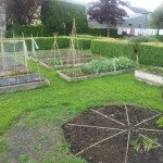 Leighlin Parish Community Garden … 3 months on