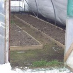 Polytunnels in the winter months