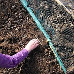 Wondering what to sow in a polytunnel in February?