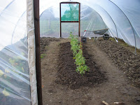 Looking After and Planting a Polytunnel in Winter