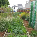 Vibrant Community Gardens and a Dream Almost Realised