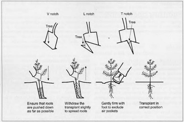 Slot Method of Hedgelaying
