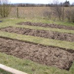 How to Plan Crop Rotation in a Vegetable Garden