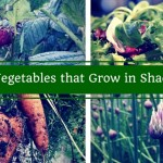 Best Fruit and Vegetables that Grow in Shade