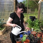 14 Tips for Watering Vegetables and Seedlings