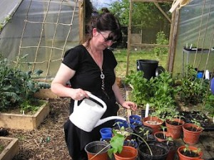 Watering Vegetable Plants and Seedlings