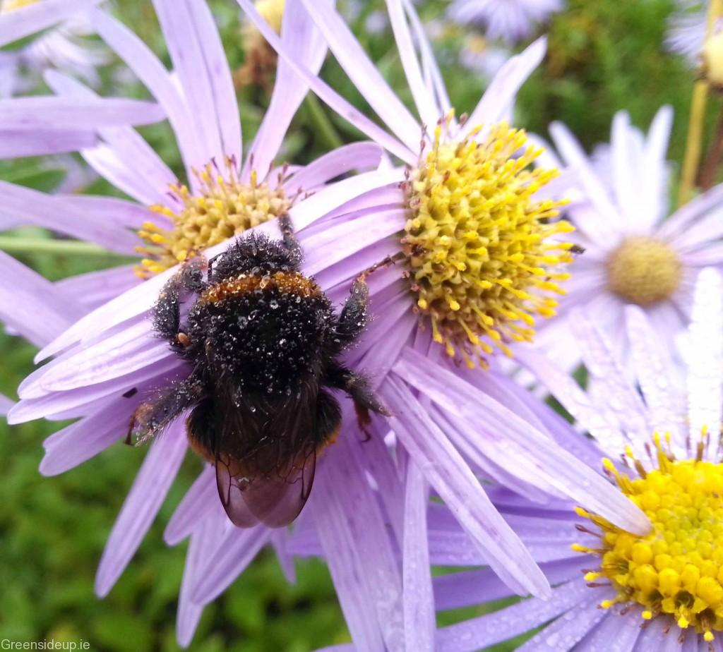 5 ways to help bees now