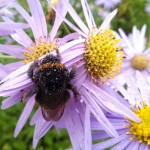 Five Ways to Help Bees Now