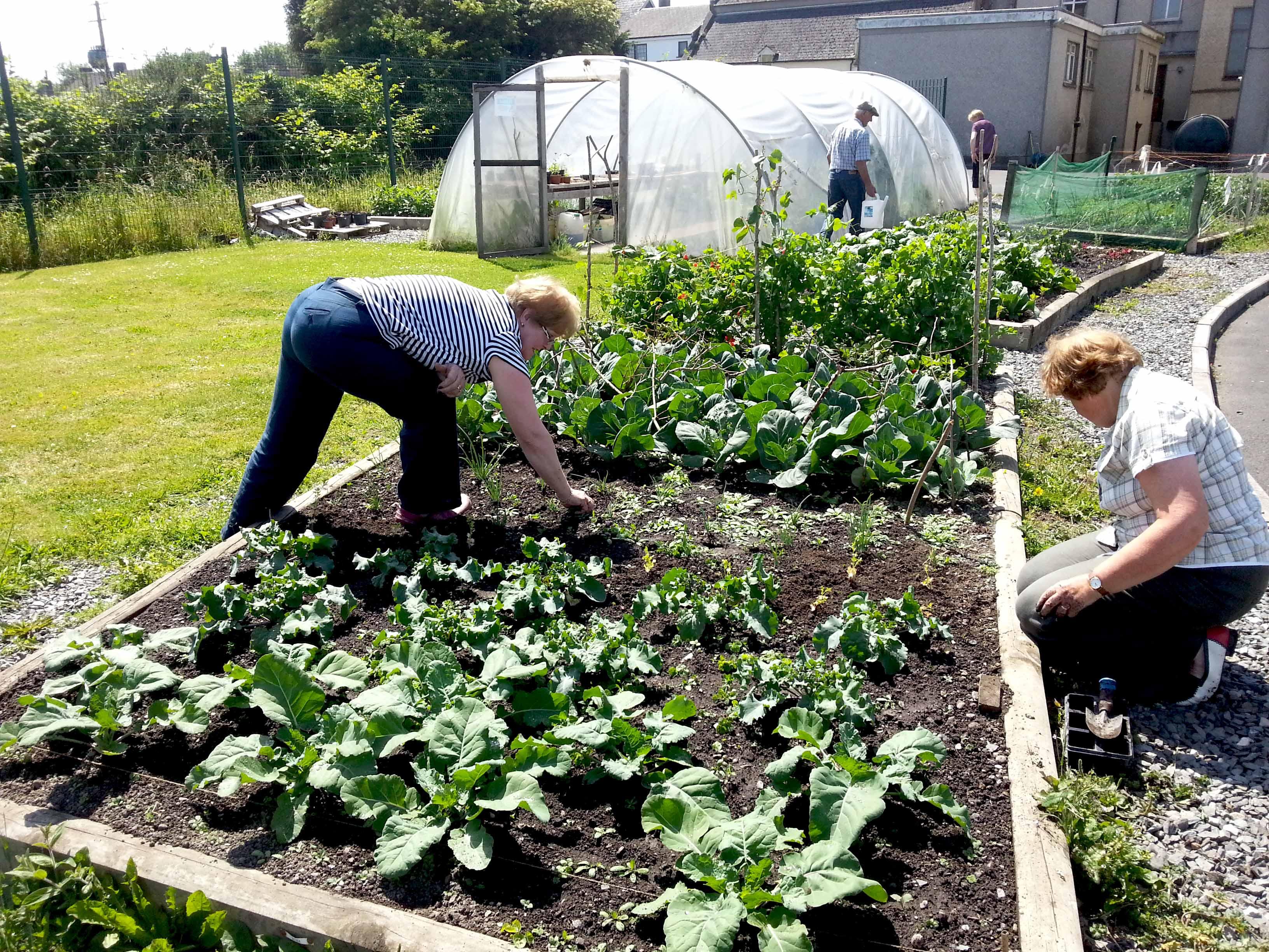 Callan Community Garden