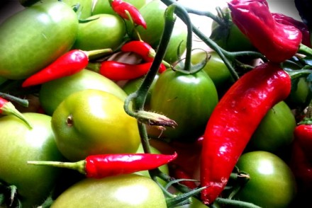 Green tomato & chilli chutney recipe