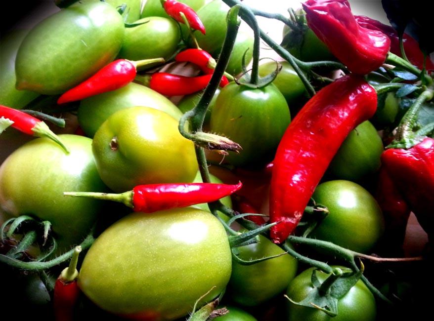 chilli pepper & tomatoes